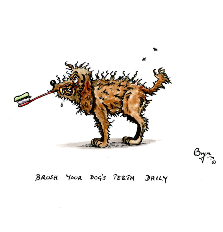 DT,-Brush-your-dogs-teeth-daily