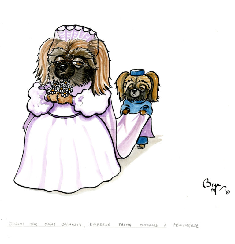 DT,-During-the-Tang-dynasty,-Emperor-Taing-married-a-Pekinese