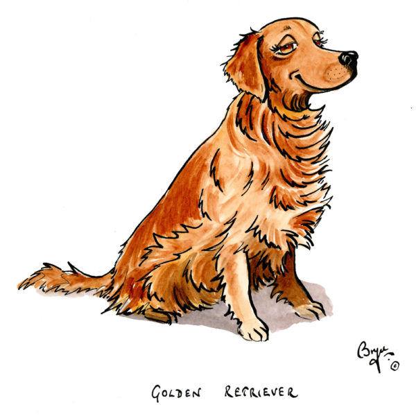 DT-Golden-Retriever