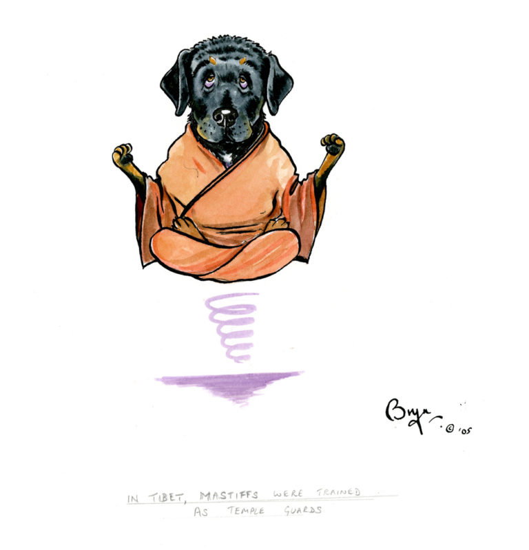 DT-In-Tibet-mastiffs-were-trained-as-temple-guards