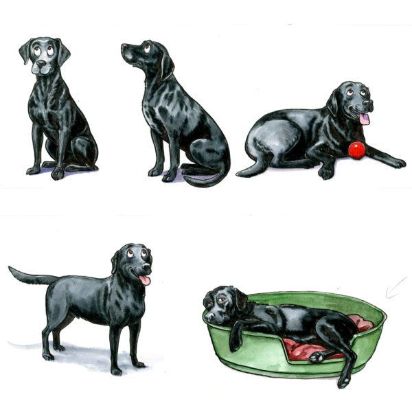 OA-UF-Black-labrador-study