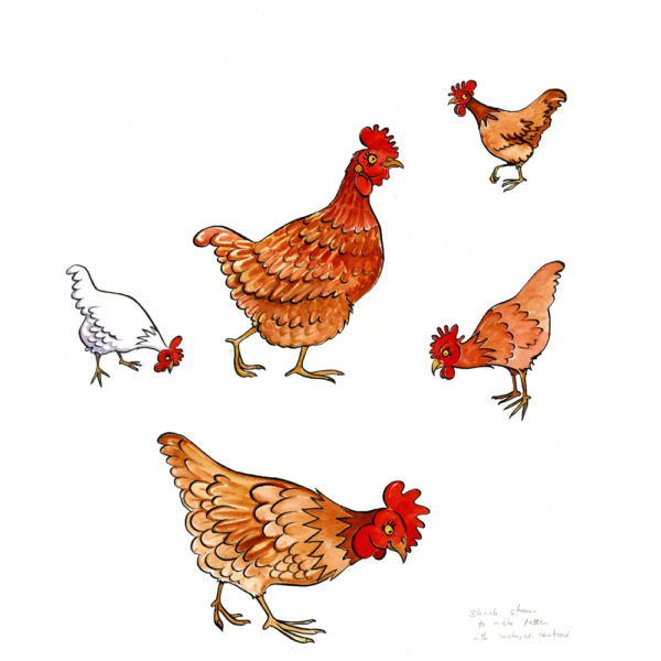 OA-UF-Chooks