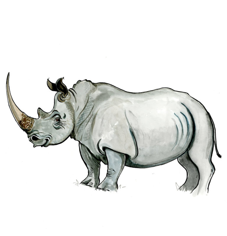 OA-UF,-Rhino