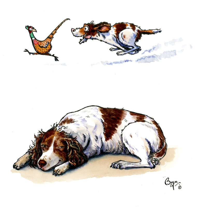 OA,-UF,-Sweet-Spaniel-Dreams