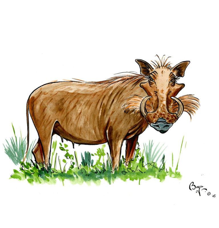 OA-UF-What's-up-Warthog_