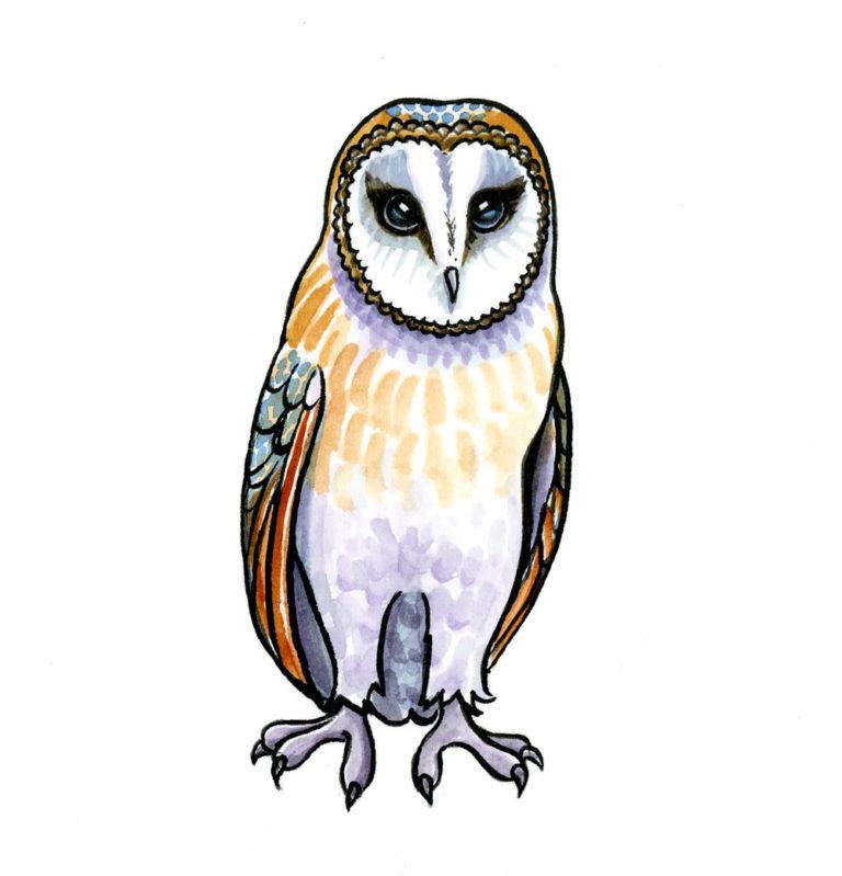 OA-UF.-Barn-Owl-(-v-small)