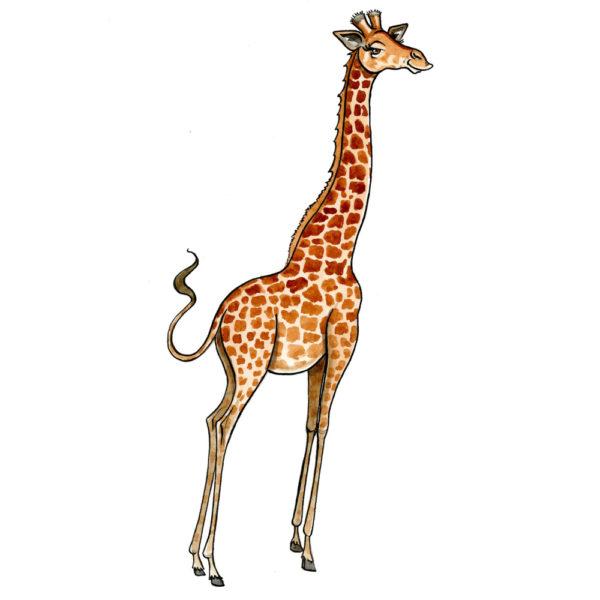 OA-UF.-Giraffe