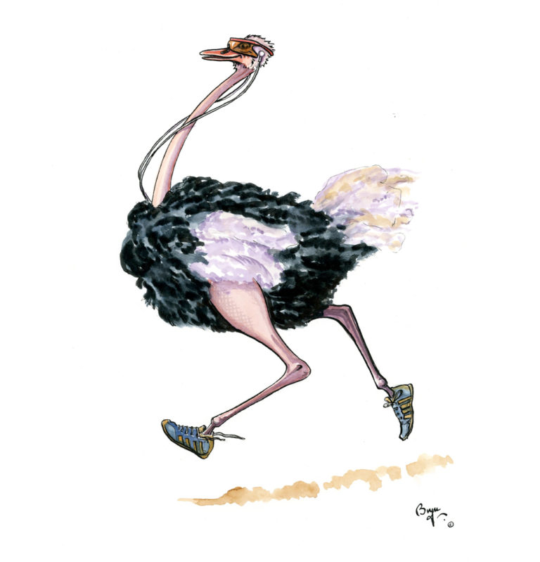 OA_Birds.-Ostrich-Jogging
