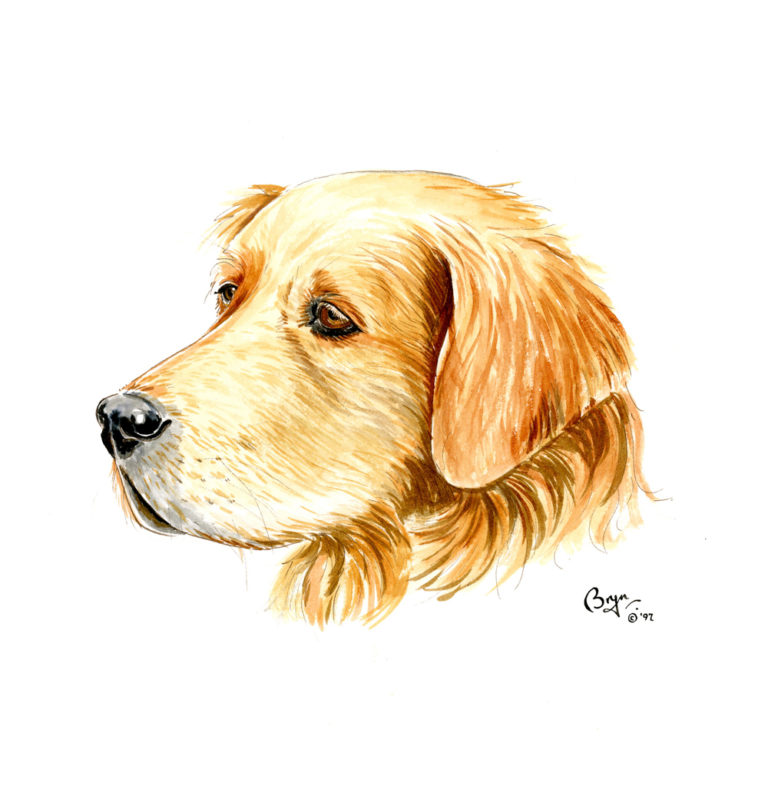 OA_Dogs-Golden-Retriever-head