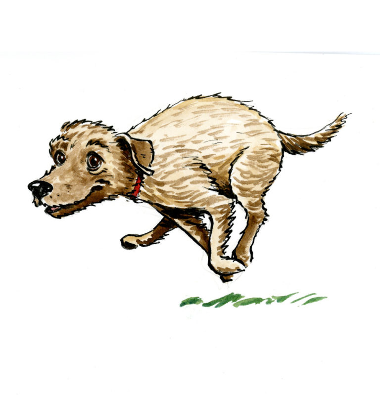 OA_Dogs-Tearing-Terrier-