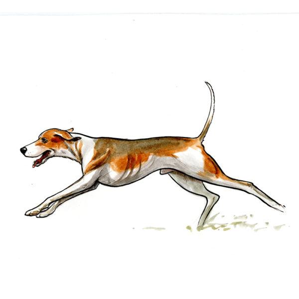 OA_Hunting.-Hound-running