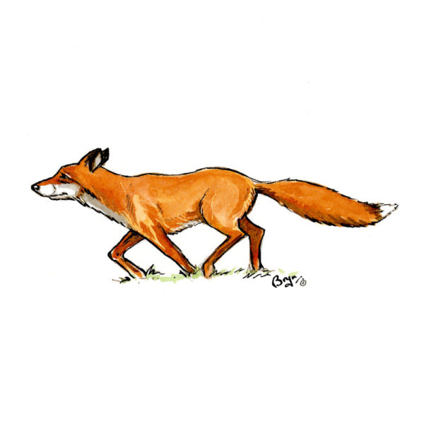 OA_Hunting_Fox-Trotting-Fox-study