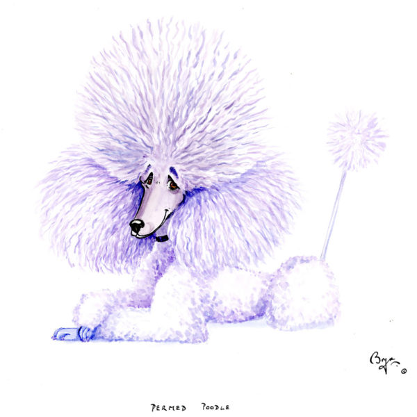 Permed-Poodle