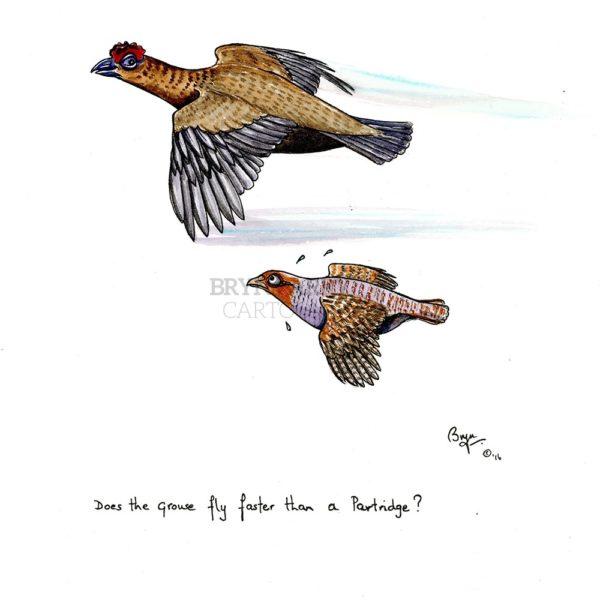 Does-the-grouse-fly-faster..-32338